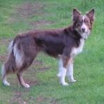 Abbey in profile