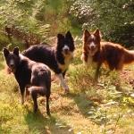 Dogs in Delgaty Woods