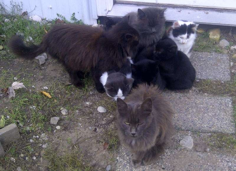 That's nine cats per square foot...