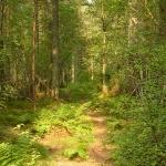 Delgaty Woods