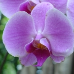 orchid_01