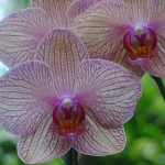 orchid_02