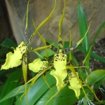 orchid_04