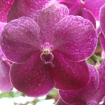 orchid_05