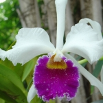 orchid_06