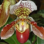 orchid_11
