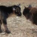 Kid meets Cat
